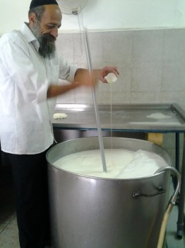 Yoav of Kadosh Tzfat Cheese Pouring the enzymes into the milk to start the process to make cheese curds.